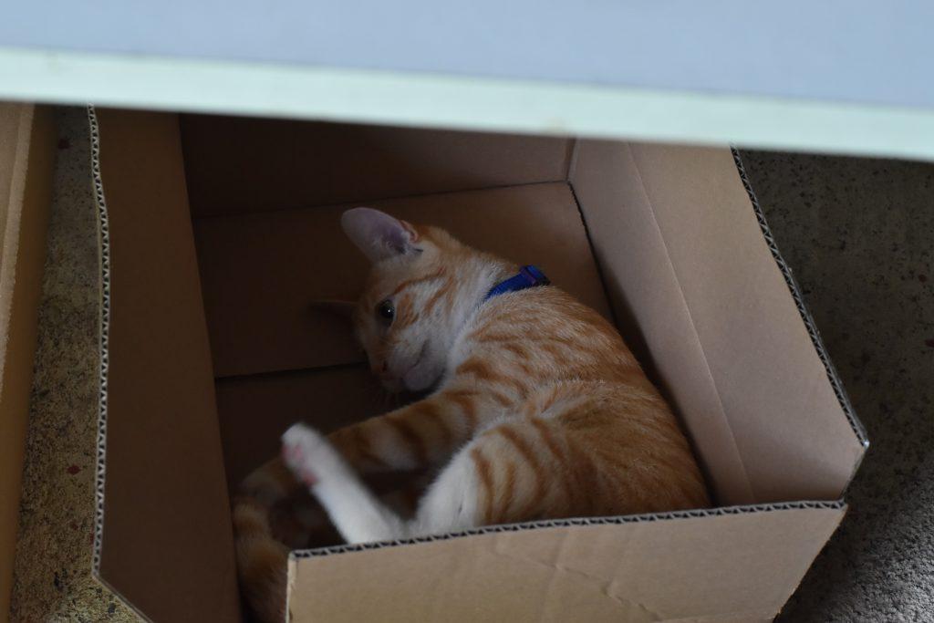 Miért imádják a macskák a dobozokat?